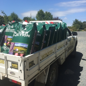Notman Pasture Seeds - Ford Ranger Ute Adam Fisher