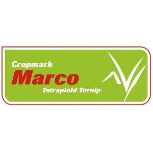 Marco Turnip - Notman Pasture Seeds