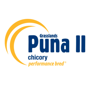 Puna II Chicory - Notman Pasture Seeds