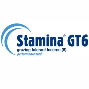 Stamina GT6 - Notman Pasture Seeds