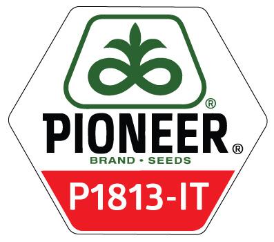 P1813-IT