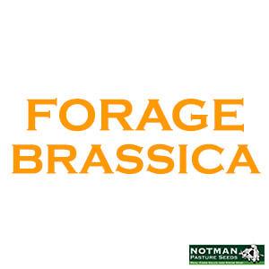 Forage Brassicas