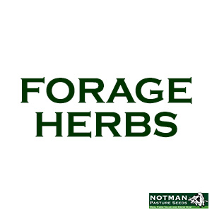 Forage Herbs