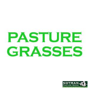 Pasture Grasses