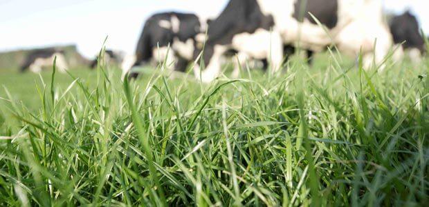 GrubOUT - Cattle & Grass