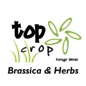 Top-Crop-Brassica-&-herbs