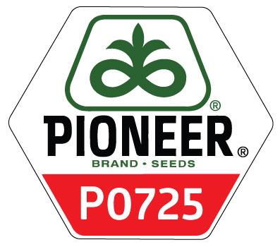P0725 Maize Notman Pasture Seeds