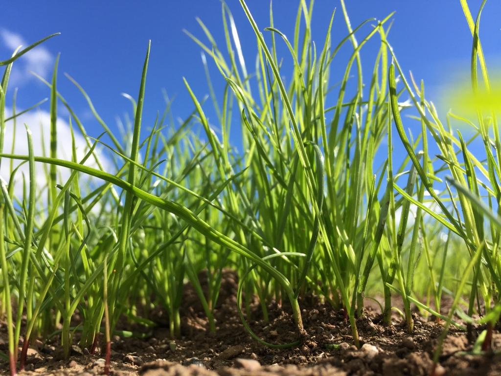 Notman Pasture Seeds - Seed Grass