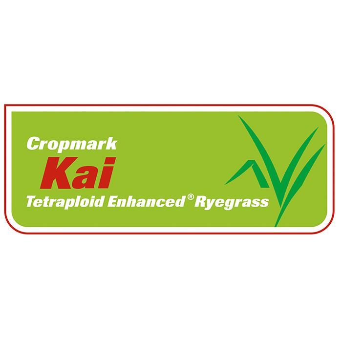 Kai Tetraploid Enhanced Ryegrass - Notman Pasture Seeds