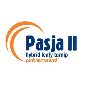 Pasja II (square)