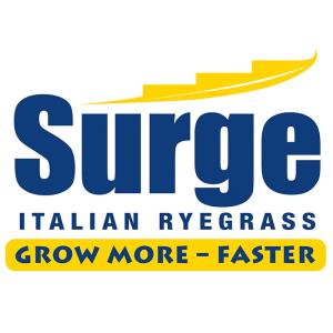 Surge Italian Ryegrass - Notman Pasture Seeds