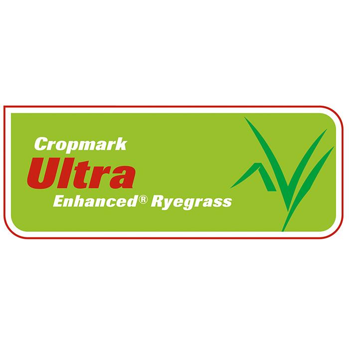 Ultra Enhanced Ryegrass - Notman Pasture Seeds
