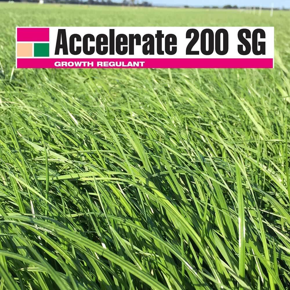 Accelerate 200SG