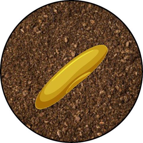 Endophyte 1