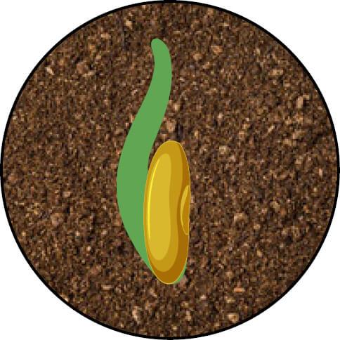 Endophyte 2