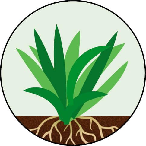 Endophyte 23