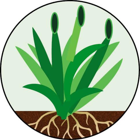 Endophyte 4