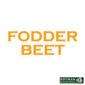 Fodder Beet