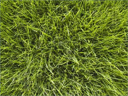 Grass-Background-1189439