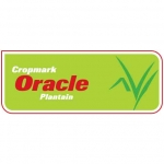 Oracle Plantain