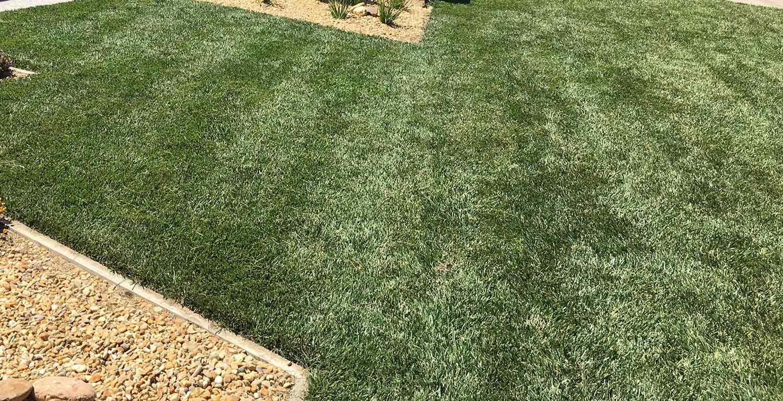 Lawn & Turf - Notman Seeds 2