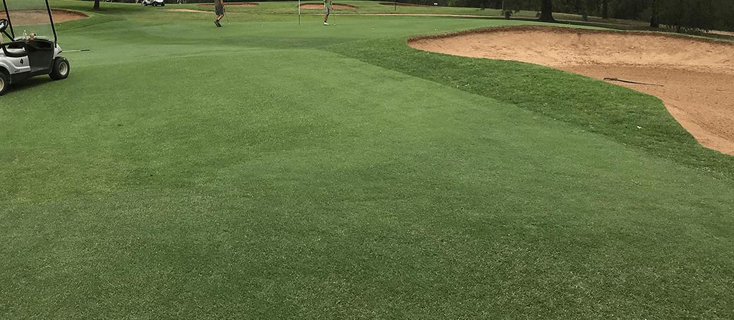 Lawn & Turf - Notman Seeds golf.jpg