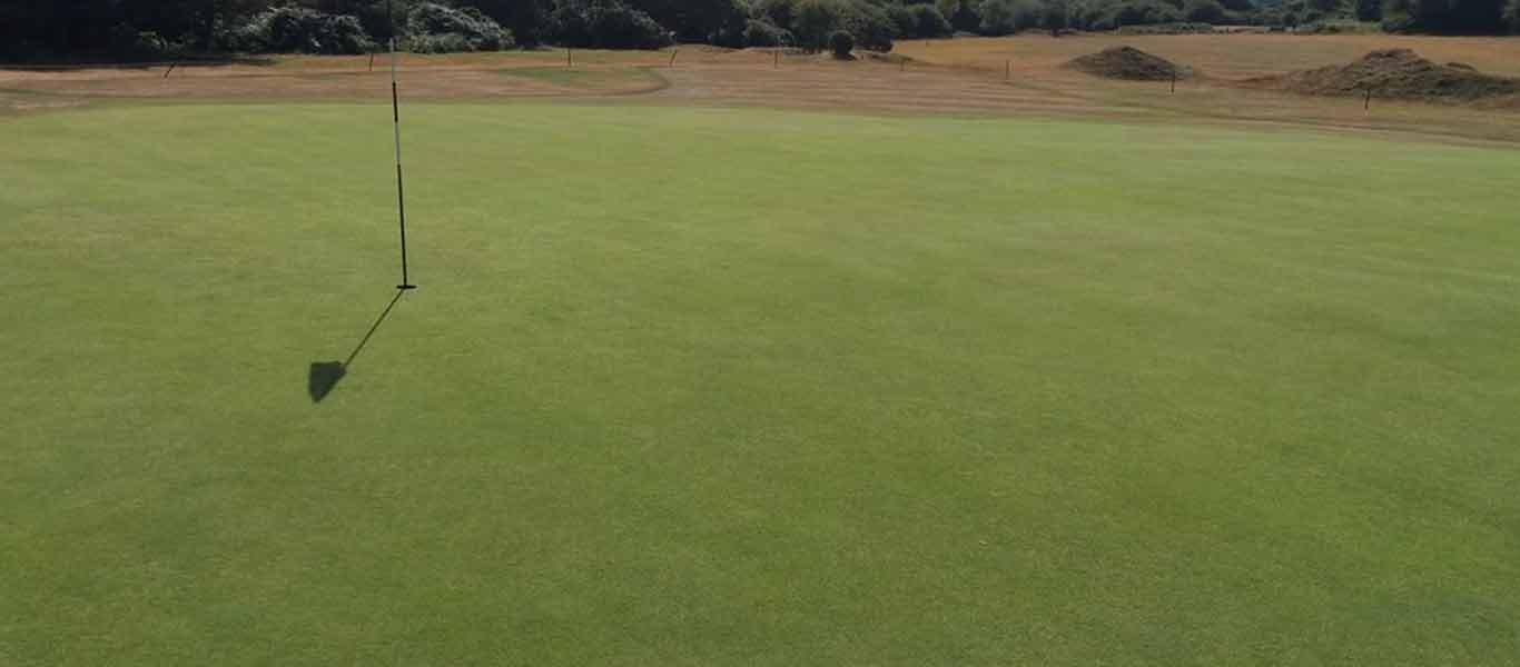 Notman Seeds Golf Bentgrass 001