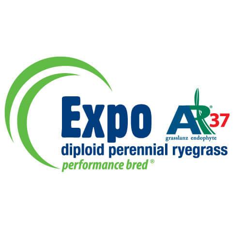 Expo-AR37-Notman-Seeds