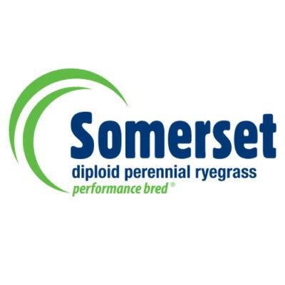 Somerset Perennial Ryegrass Notman Seeds