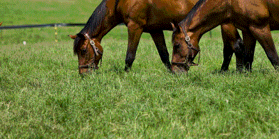 Equine-Pasture-Blends---Notman-Pasture-Seeds