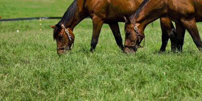 Equine-Pasture-Blends---Notman-Pasture-Seeds