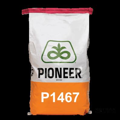 P1467-Maize-Hybrid-Notman-Seeds