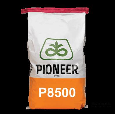 P8500-Maize-Hybrid-Notman-Seeds