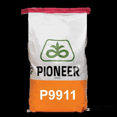 P9911-Maize-Hybrid-Notman-Seeds